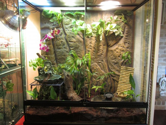 Grow Light Question For Plants With A Crested Gecko Our Reptile Forum