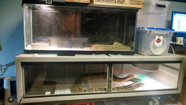 Reptile enclosures for my snakes | Our Reptile Forum