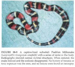 Snakes - Diseases and Disorder | Our Reptile Forum